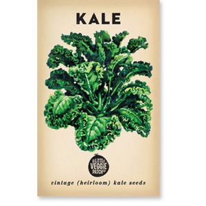 The Little Veggie Patch Co Kale 'Dwarf Blue' Heirloom Seeds