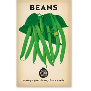 The Little Veggie Patch Co Bean 'Windsor Long Pod' Heirloom Seeds